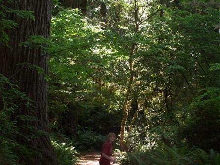 fern trail fern canyon